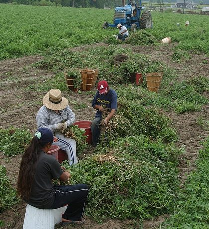 White House Issues Misleading Report on Agriculture's Need for More Foreign Workers