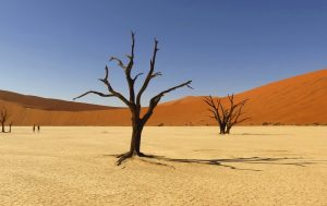 desert_tree_rotator_675x450