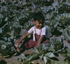 How Illegal Migration Fuels Child Labor in American Suburbia