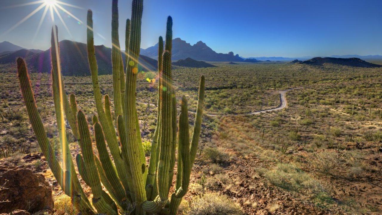 NPS100 - America's National Parks Under Assault by Smugglers