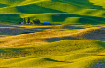 Rolling farm landscape with cultivated crops in the Palouse region of Washington State