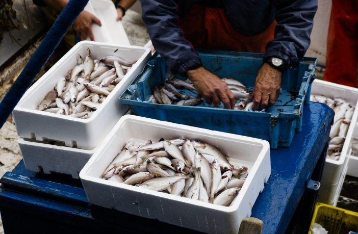 fishery h2B visa